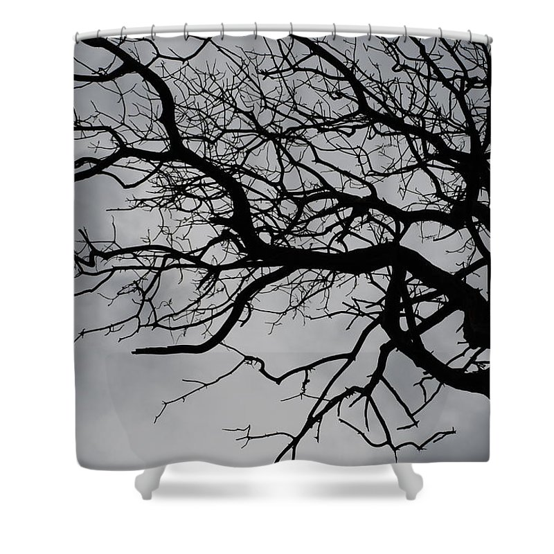 Tree Shower Curtain featuring the photograph Spooky Tree by Carol Eliassen