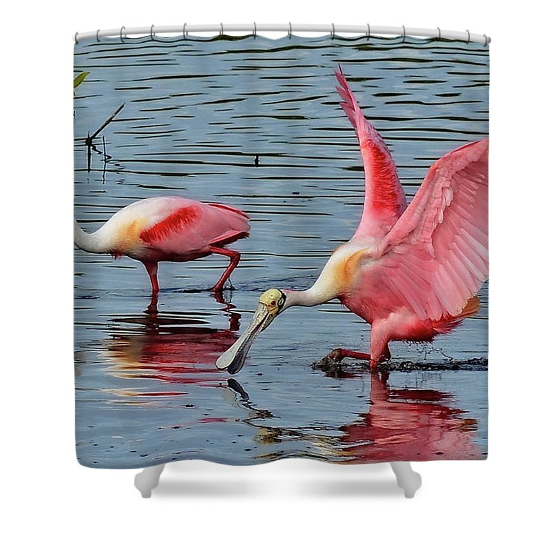Spoonbill Shower Curtain featuring the photograph Spoonbills by Tedge Toney