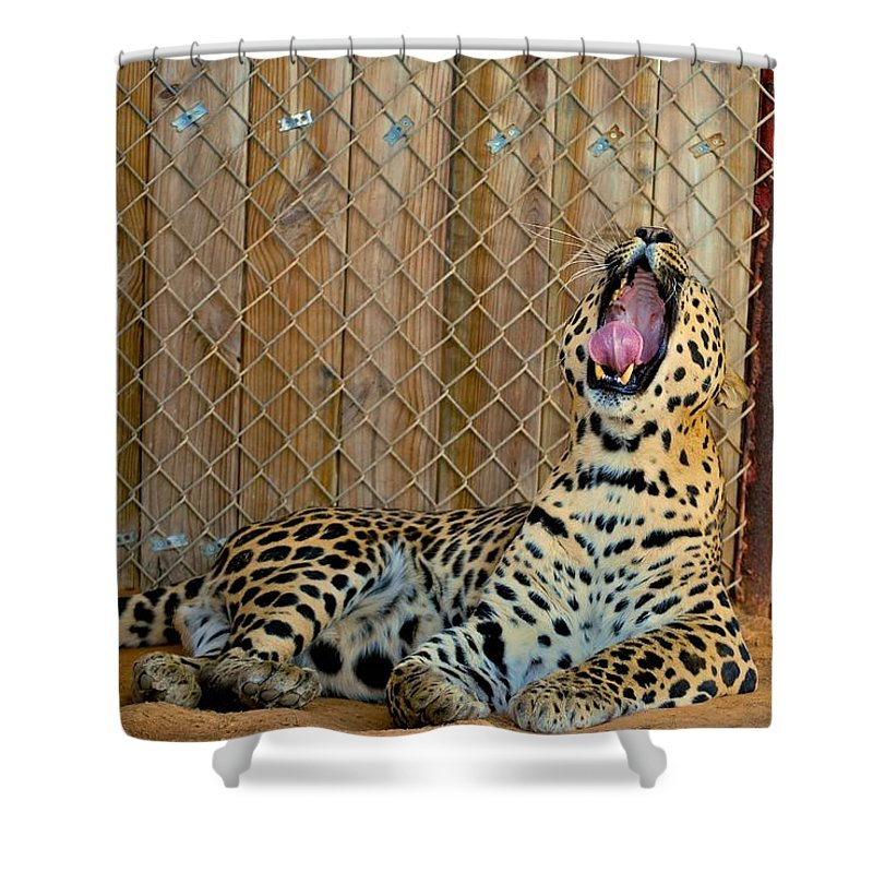 Leopards Shower Curtain featuring the photograph Spot by Donna Shahan