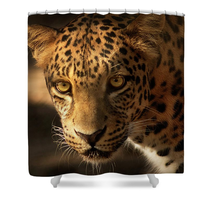 Leopard Shower Curtain featuring the photograph Spot Light by Virginia Dickens