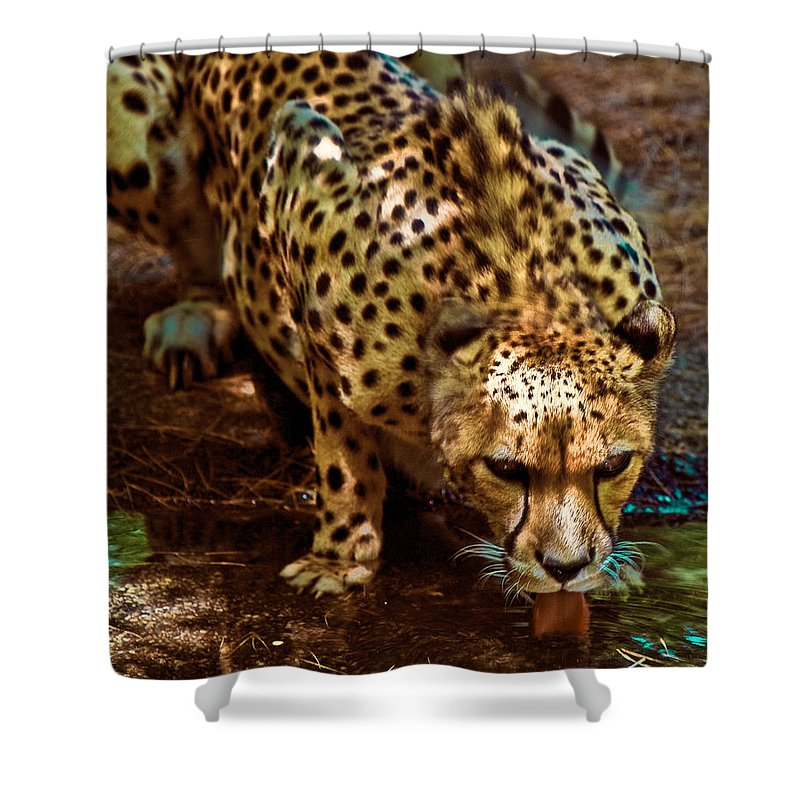 Cheetah Shower Curtain featuring the photograph Spots by Chris Lord