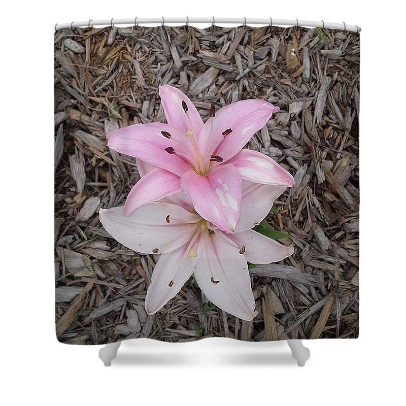 Pink Shower Curtain featuring the photograph Spotted Pink by Cindy Riley