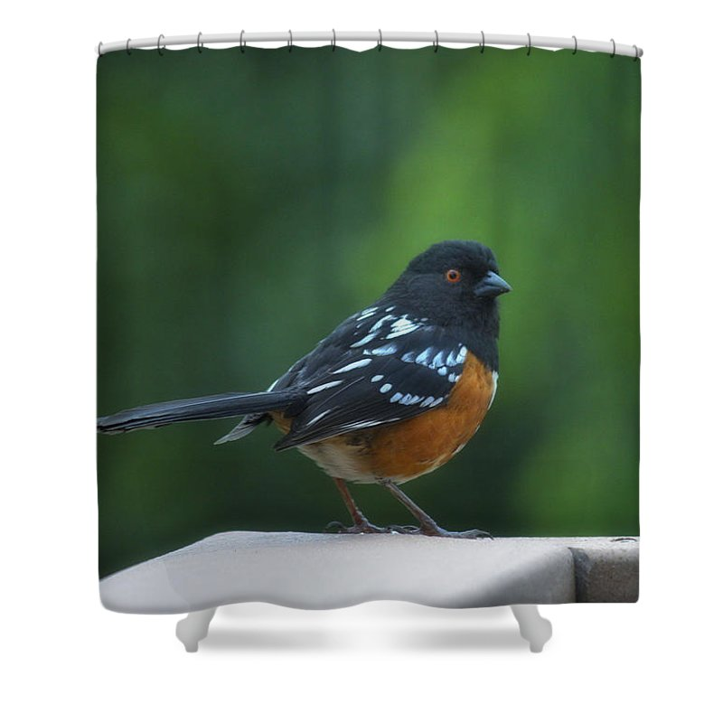 Bird Shower Curtain featuring the photograph Spotted Towhee by Linda Dunn