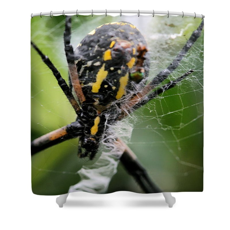 Argiope Shower Curtain featuring the photograph Sprawled by Angela Rath