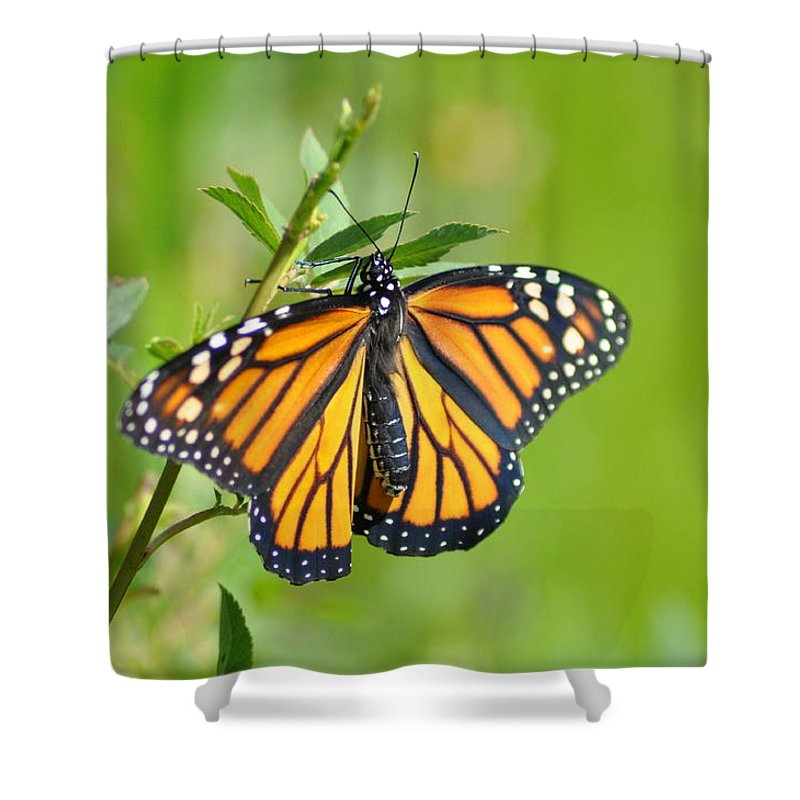 Butterfly Shower Curtain featuring the photograph Spread Your Wings by Bill Cannon