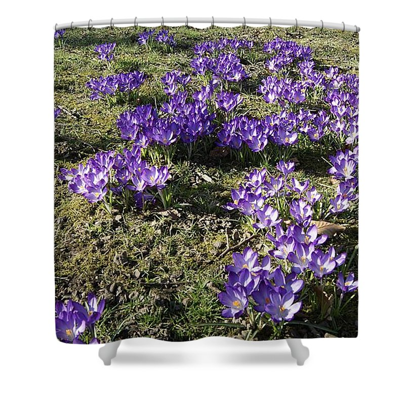 Spring Crocus Shower Curtain featuring the photograph Spring 2 by LDS Dya