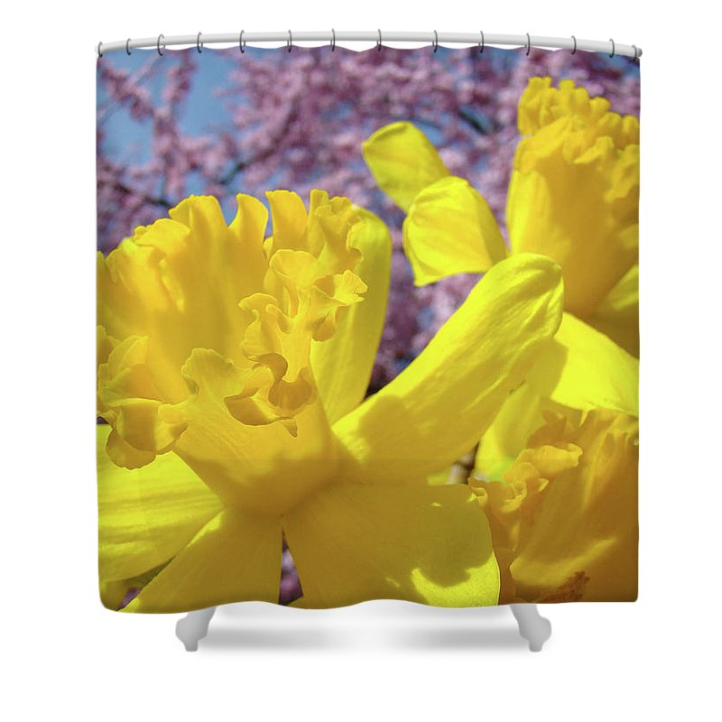 Flowers Shower Curtain featuring the photograph Spring Art Prints Yellow Daffodils Flowers Pink Blossoms Baslee Troutman by Baslee Troutman