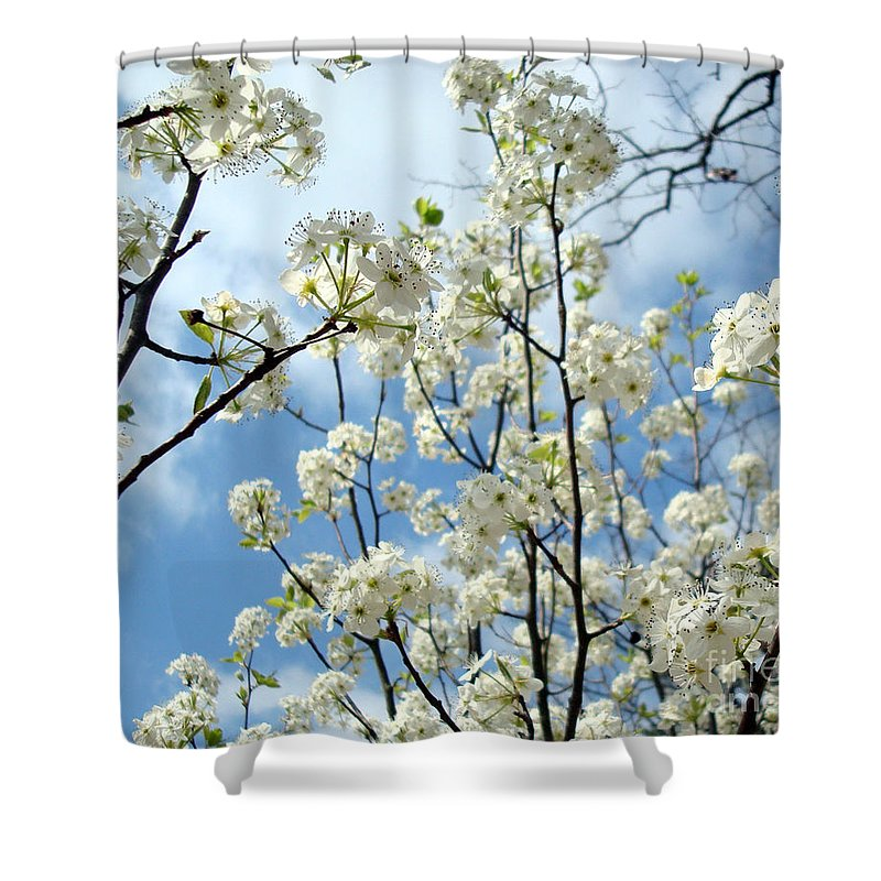 Trees Shower Curtain featuring the photograph Spring Awakening by Kathy Bucari