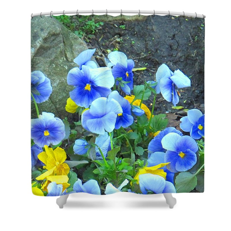 Blue Shower Curtain featuring the photograph Spring Beauties by Ian MacDonald