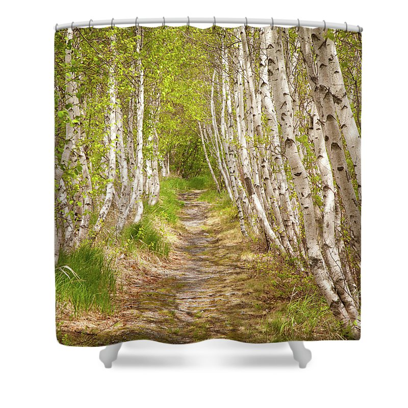 Acadia National Park Shower Curtain featuring the photograph Spring Birch by Susan Cole Kelly