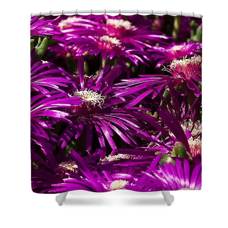 Floral Shower Curtain featuring the photograph Spring Blooms by David Patterson