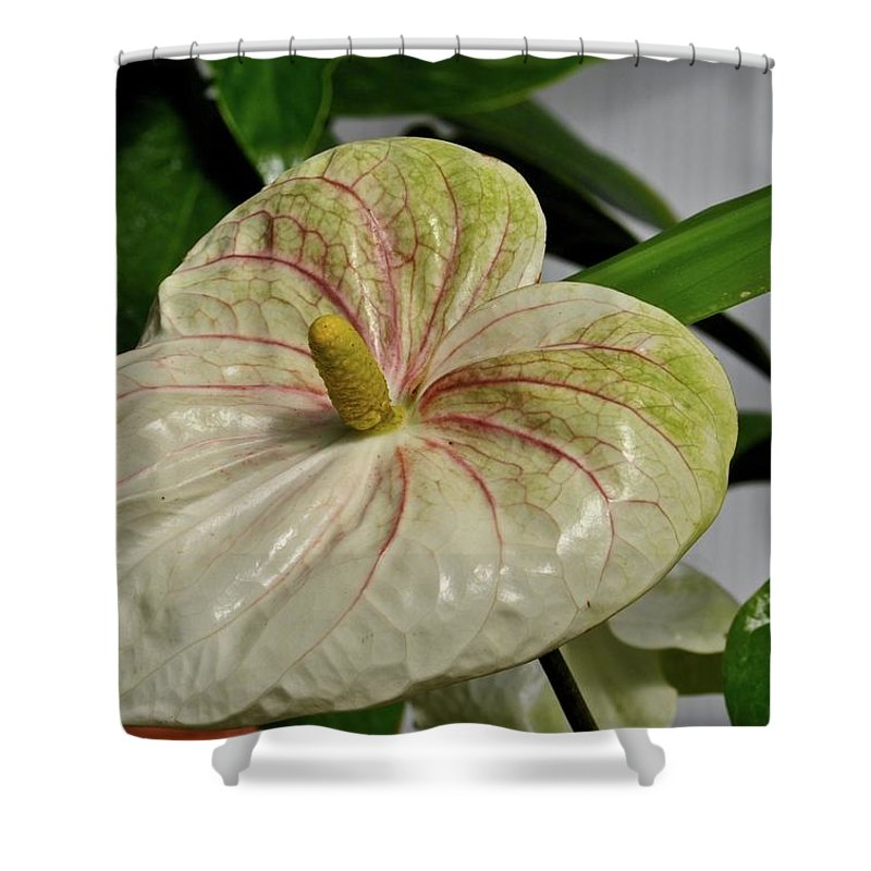Flower Shower Curtain featuring the photograph Spring Bulb by John Taylor