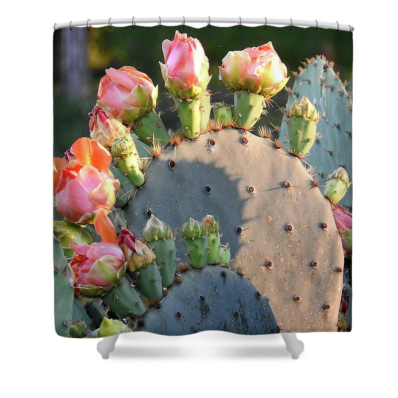 Texas Shower Curtain featuring the photograph Spring Cactus 15 by Karen Mangold
