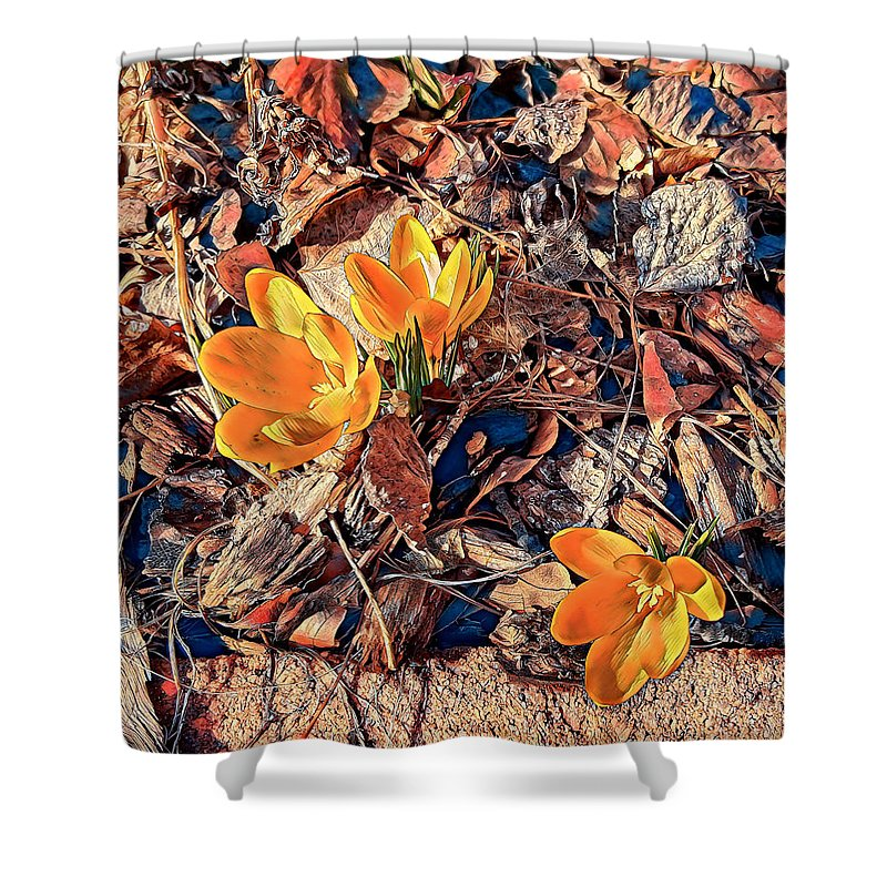 Spring Shower Curtain featuring the photograph Spring Crocus Flower by Jim Thomas