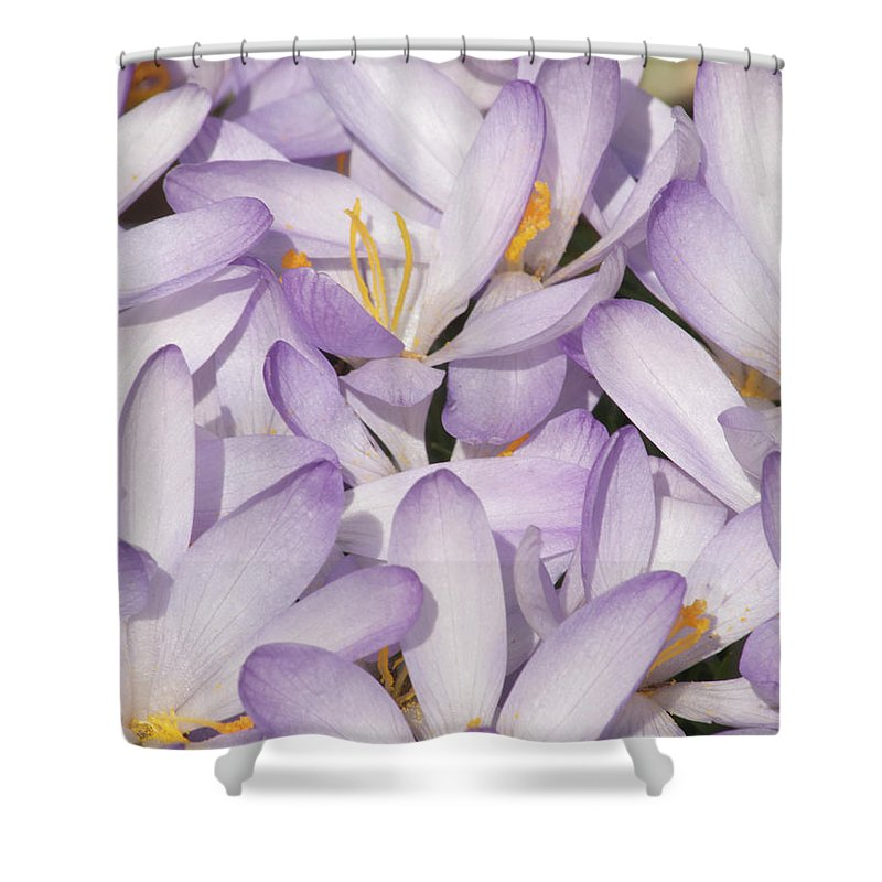 Flowers Shower Curtain featuring the photograph Spring Crocuses by Michael Peychich