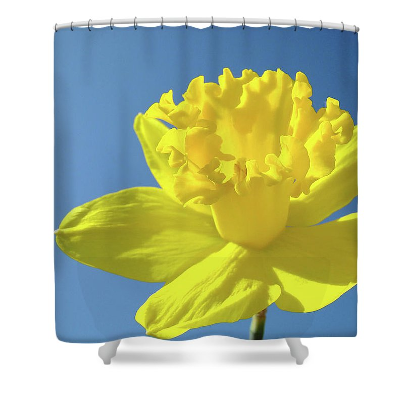 Sky Shower Curtain featuring the photograph Spring Daffodil Flowers Art Prints Blue Sky Baslee Troutman by Baslee Troutman