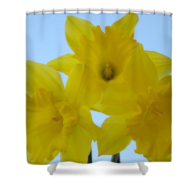 �daffodils Artwork� Shower Curtain featuring the photograph Spring Daffodils 2 Flowers Art Prints Gifts Blue Sky by Baslee Troutman