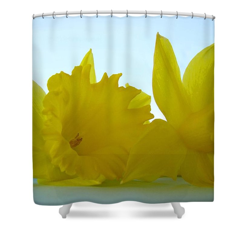 �daffodils Artwork� Shower Curtain featuring the photograph Spring Daffodils Flowers Art Prints Blue Skies by Baslee Troutman
