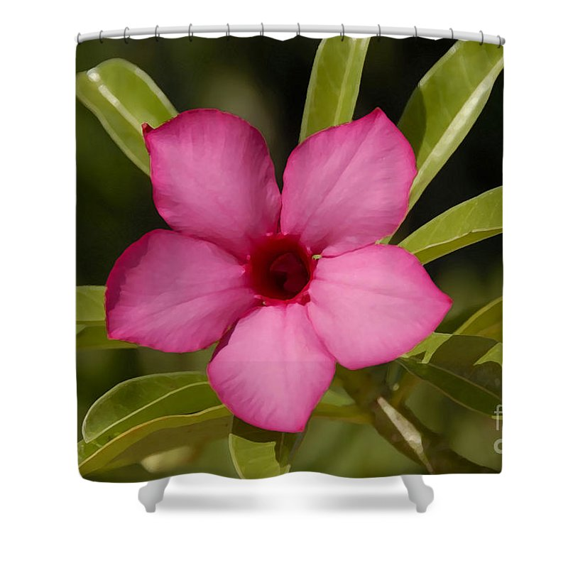 Spring Shower Curtain featuring the photograph Spring by David Lee Thompson