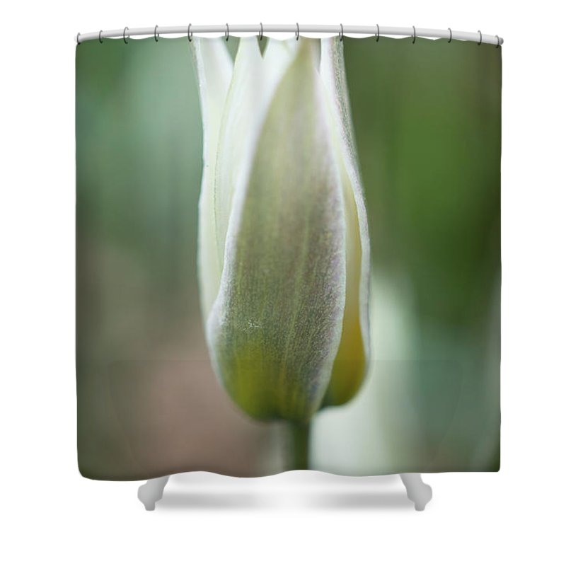 Spring Flowers Shower Curtain featuring the photograph Spring Flower Macro by Lilia D
