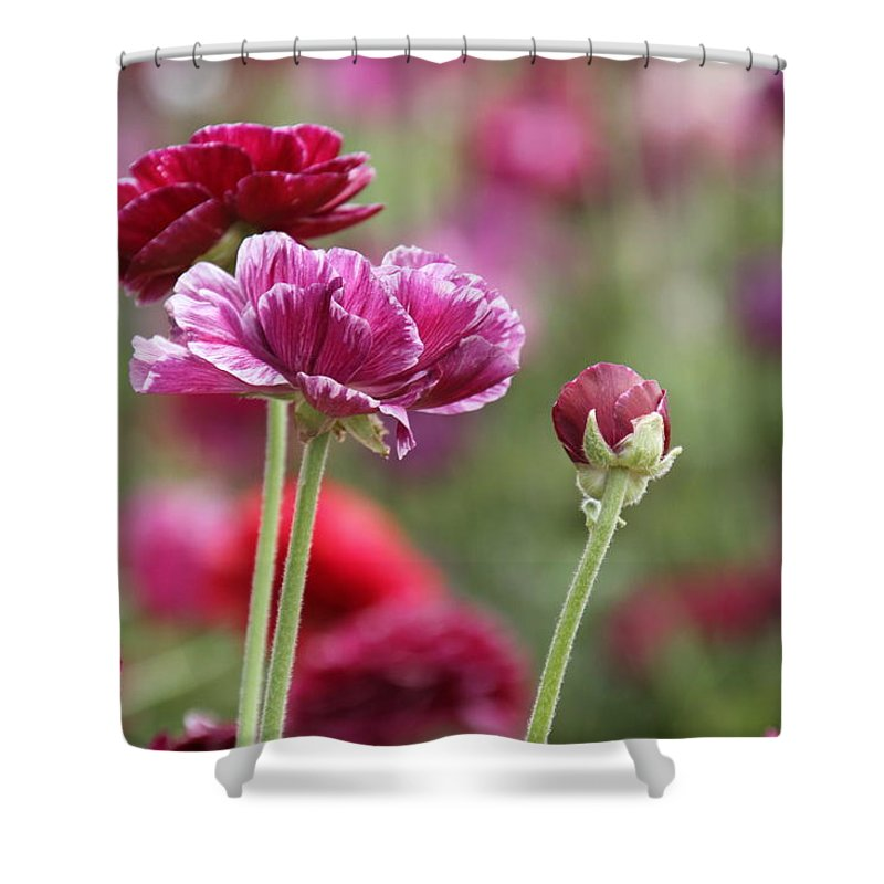 Spring Flowers Shower Curtain featuring the photograph Spring Flowers by Mary Ourada