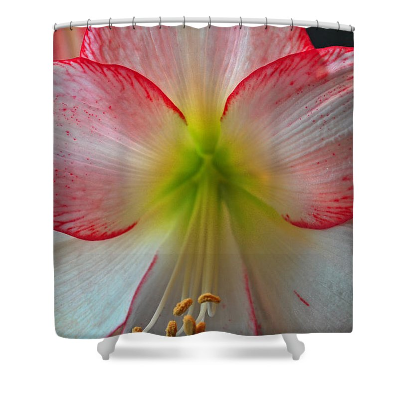 Flowers Shower Curtain featuring the photograph Spring Forth by Donna Shahan