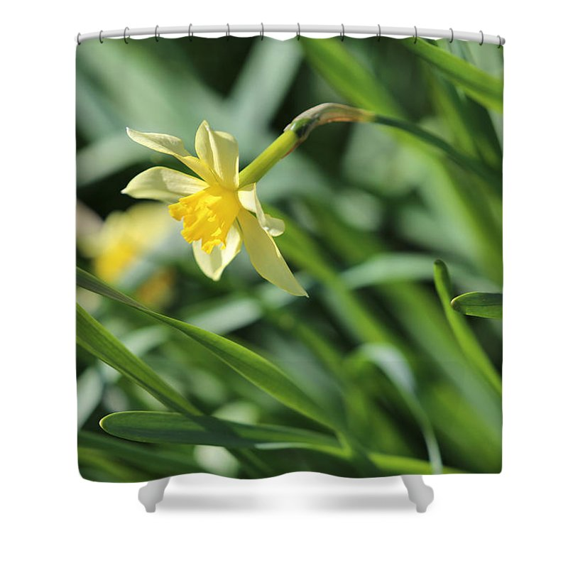 Flora Shower Curtain featuring the photograph Spring Forward by Theresa Campbell