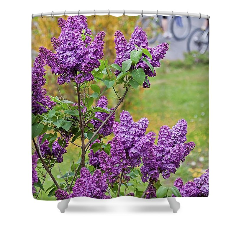 Lilac Shower Curtain featuring the photograph Spring Has Arrived by Tatiana Travelways