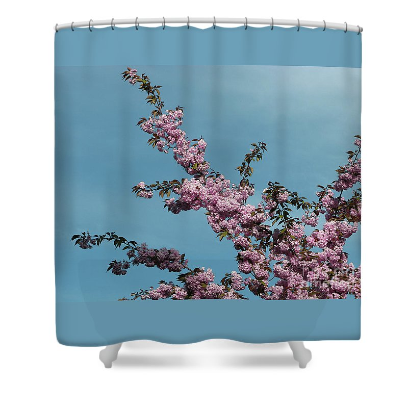 Spring Shower Curtain featuring the photograph Spring In Bloom by Ann Horn