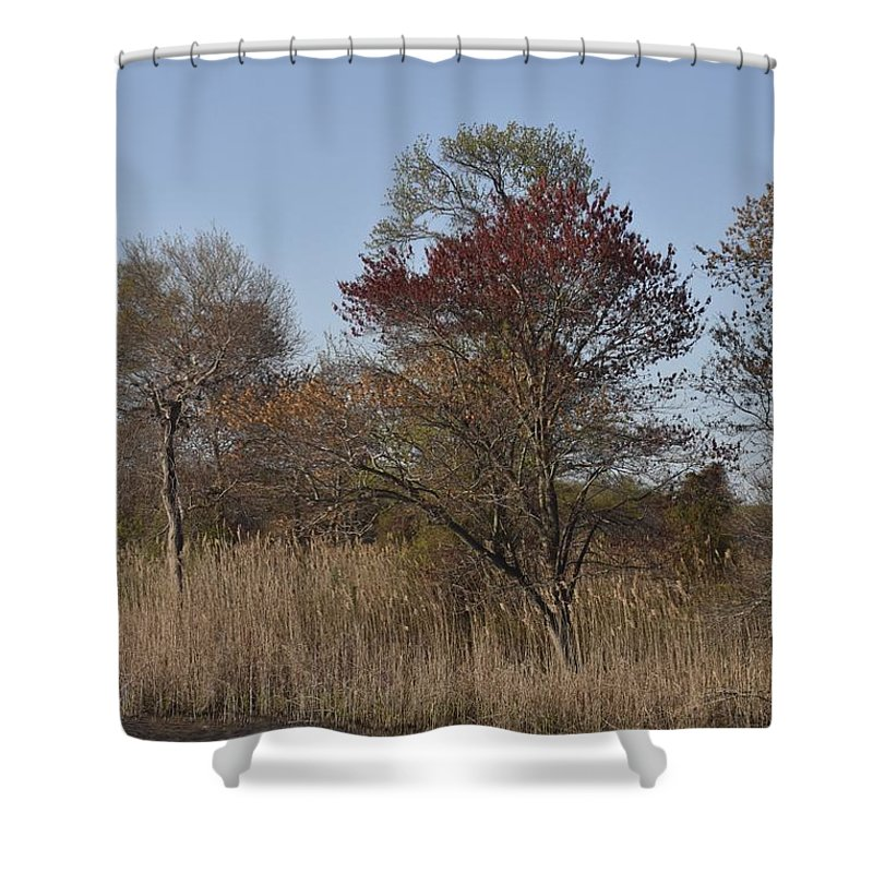 Trees Shower Curtain featuring the photograph Spring In Bombay Hook by Michael Senn