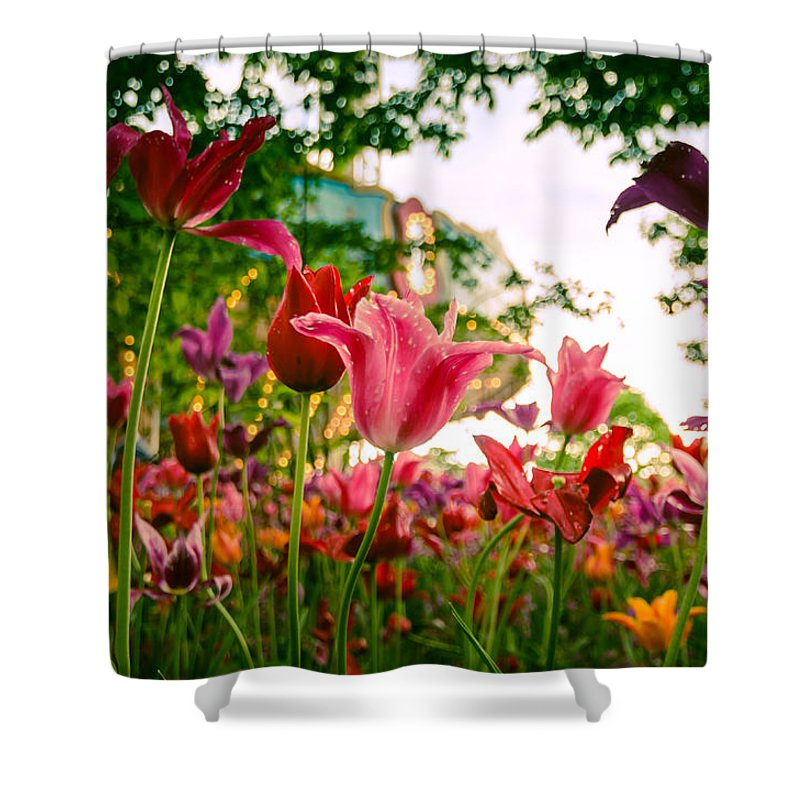 Tivoli Shower Curtain featuring the photograph Spring In Tivoli by Kristina Jakubikova