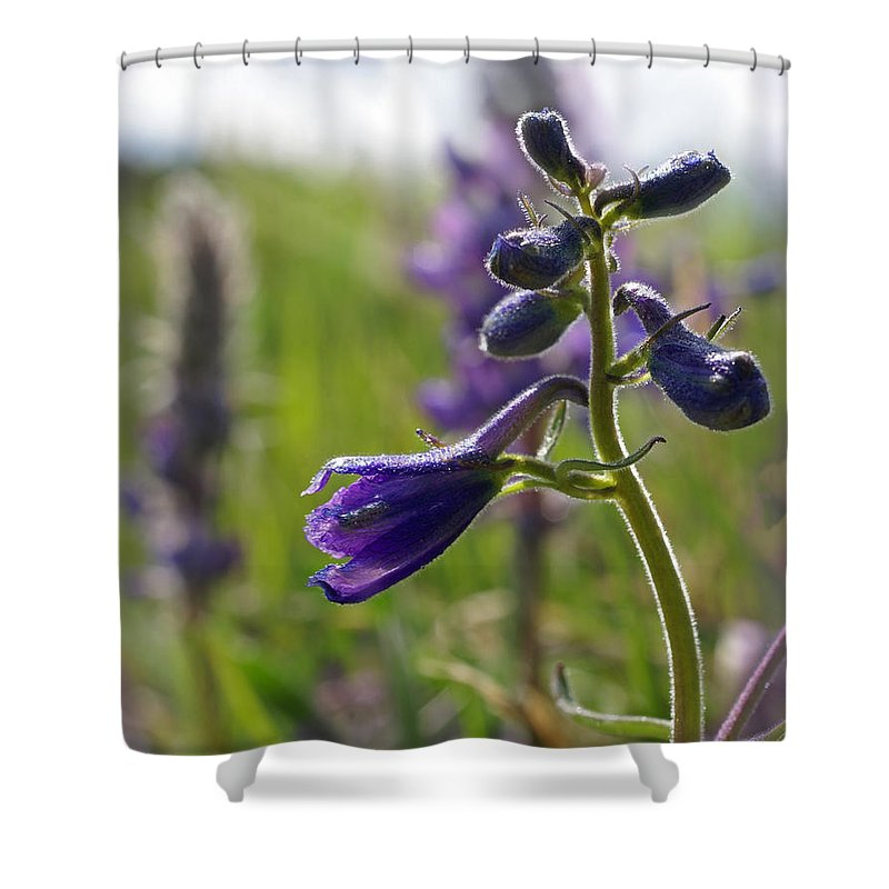 Larkspur Shower Curtain featuring the photograph Spring Larkspur by Heather Coen
