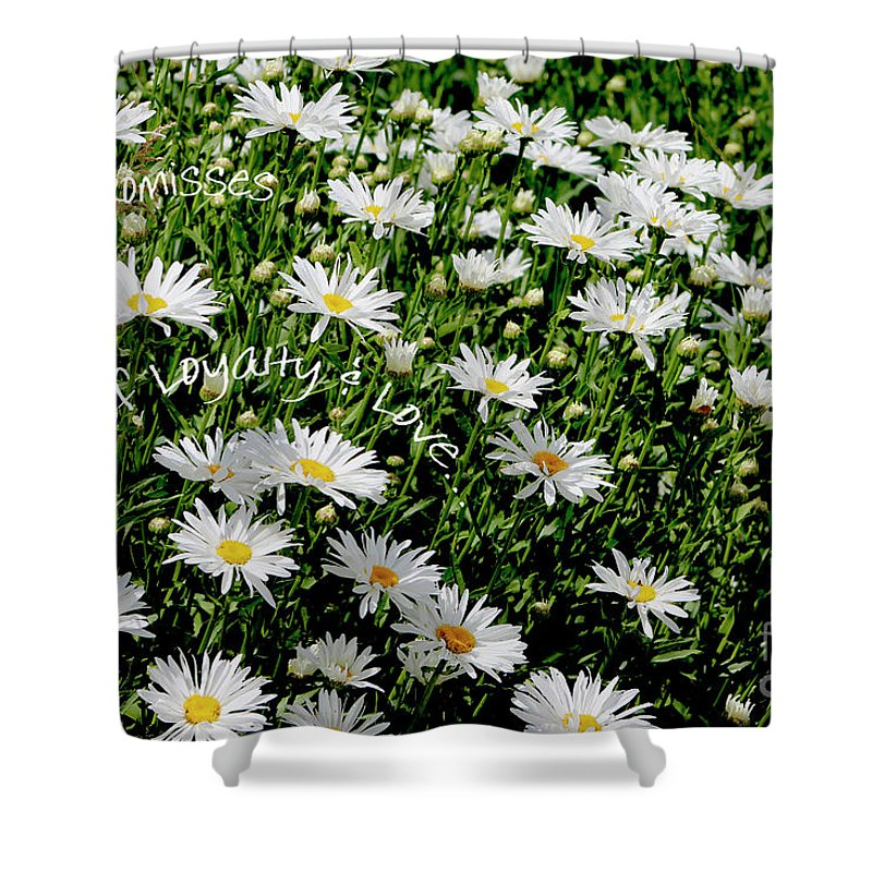 Daisies Shower Curtain featuring the photograph Spring Loyal Love Daisies by Dale E Jackson