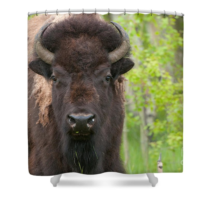 Grand Tetons Shower Curtain featuring the photograph Spring Matriarch by Sandra Bronstein