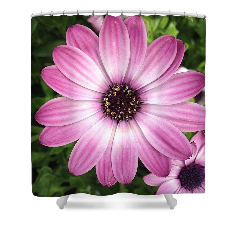 Lavender Shower Curtain featuring the photograph Spring Perfection by Brenda Gala