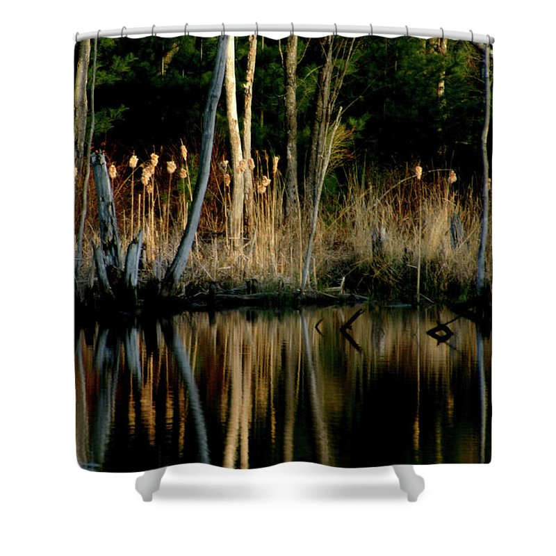 Cattails Shower Curtain featuring the photograph Spring Reflections by Wayne King