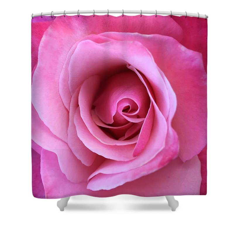 Pink Shower Curtain featuring the photograph Spring Rose by Agnes Felipe