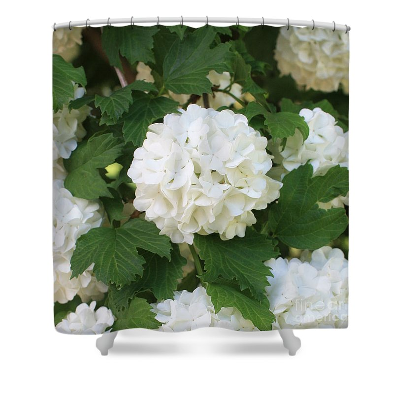 Snowball Shower Curtain featuring the photograph Spring Snowball by Carol Groenen