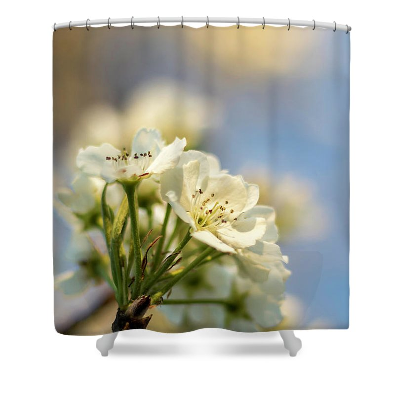 Flowers Shower Curtain featuring the photograph Spring by Travis Boyd