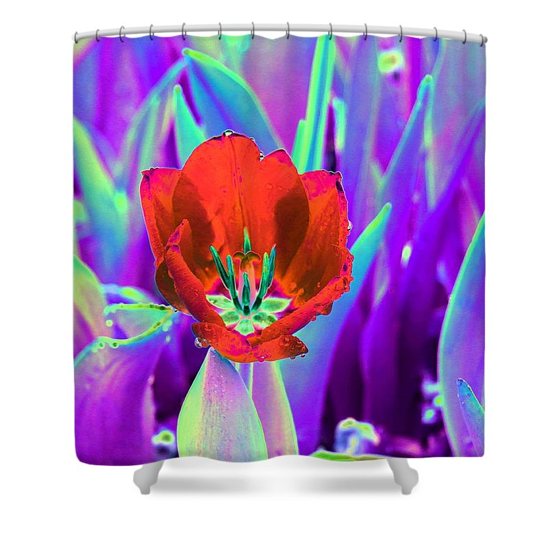 Tulip Shower Curtain featuring the photograph Spring Tulips - Photopower 3146 by Pamela Critchlow