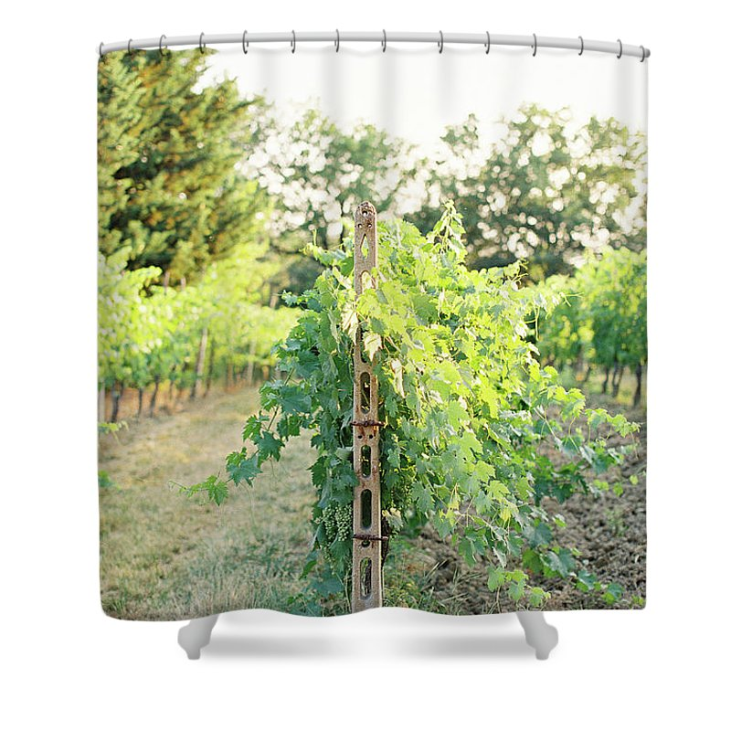 Grape Shower Curtain featuring the photograph Spring Vines by Seth Mourra
