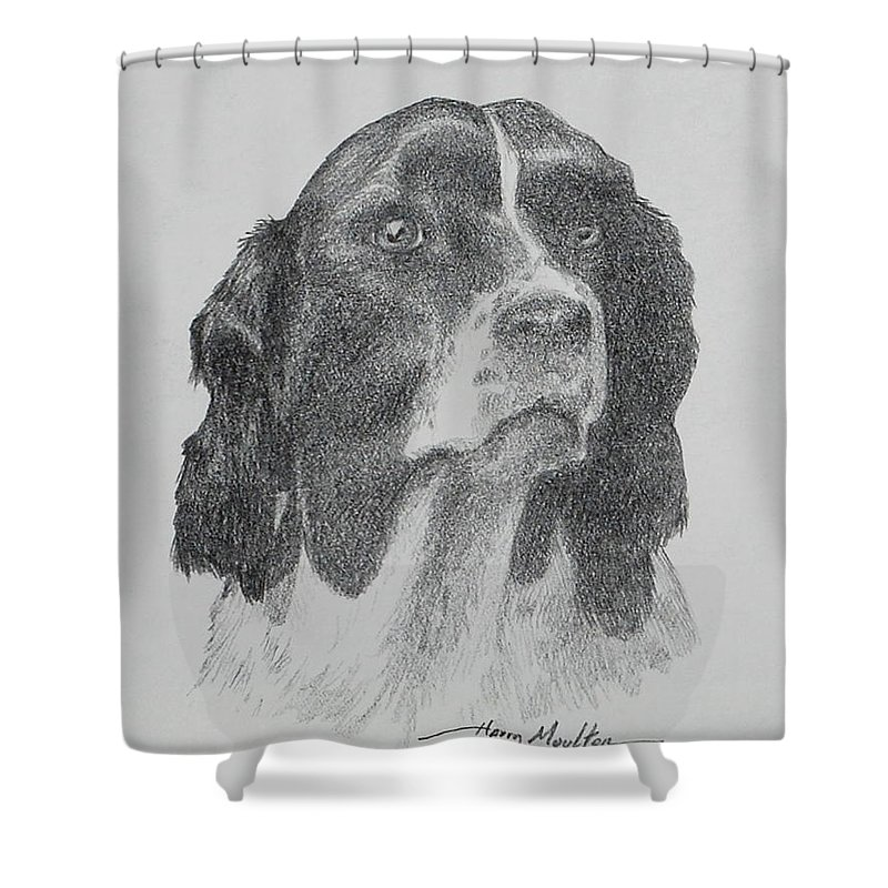 Dogs Shower Curtain featuring the drawing Springer by Harry Moulton
