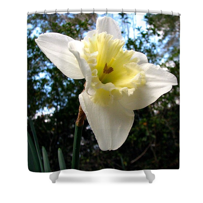 Daffodil Shower Curtain featuring the photograph Spring's First Daffodil 3 by J M Farris Photography