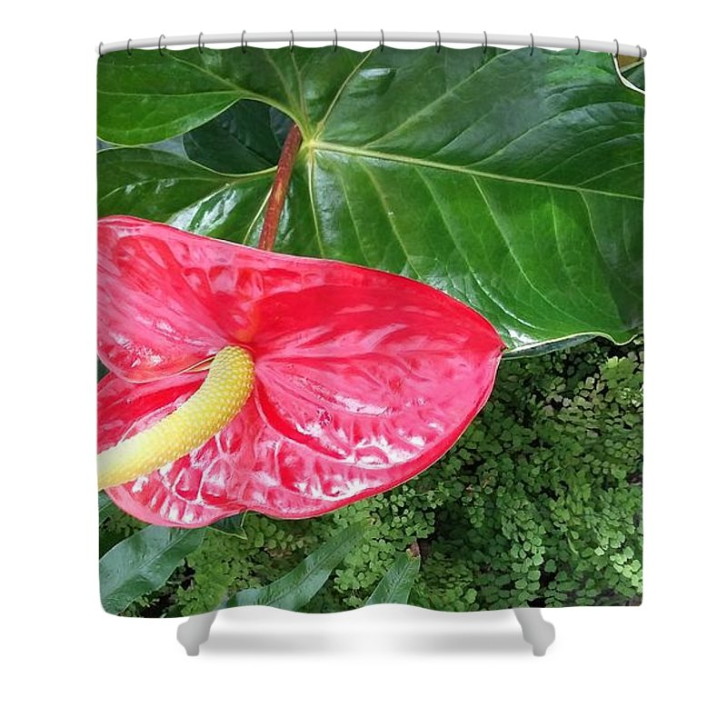 Flowers Shower Curtain featuring the photograph Springtime In Spokane by Patty Miller