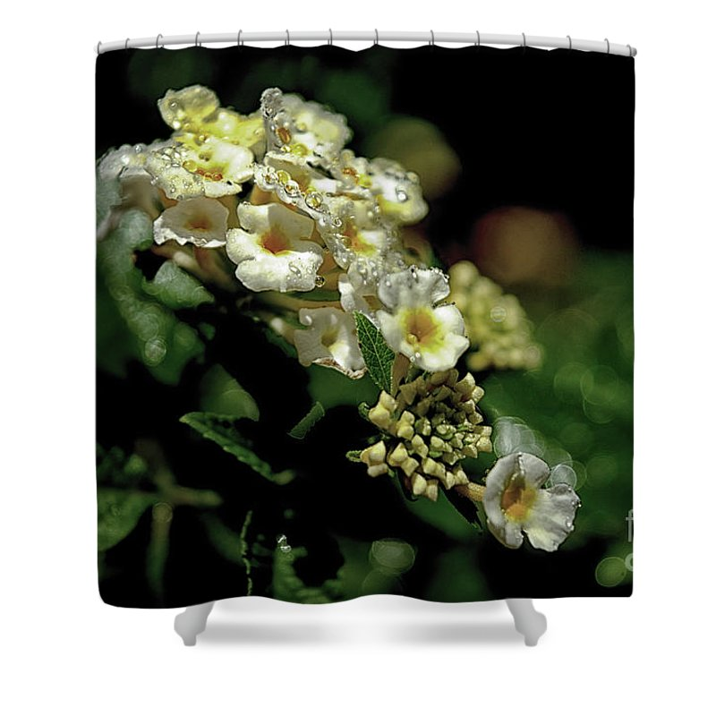 Michelle Meenawong Shower Curtain featuring the photograph Sprinkles On Lantana Flower by Michelle Meenawong
