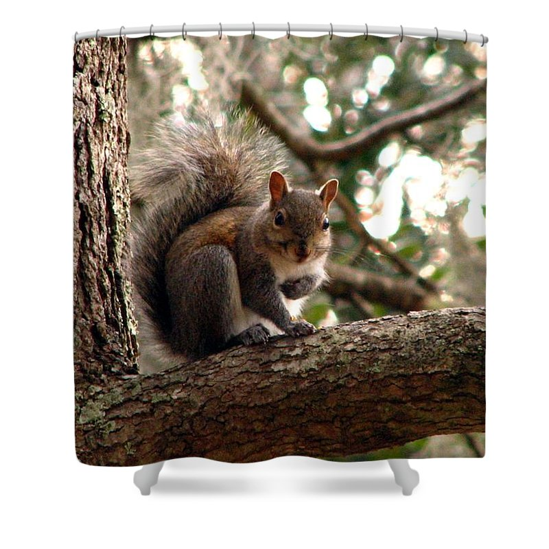 Squirrel Shower Curtain featuring the photograph Squirrel 8 by J M Farris Photography