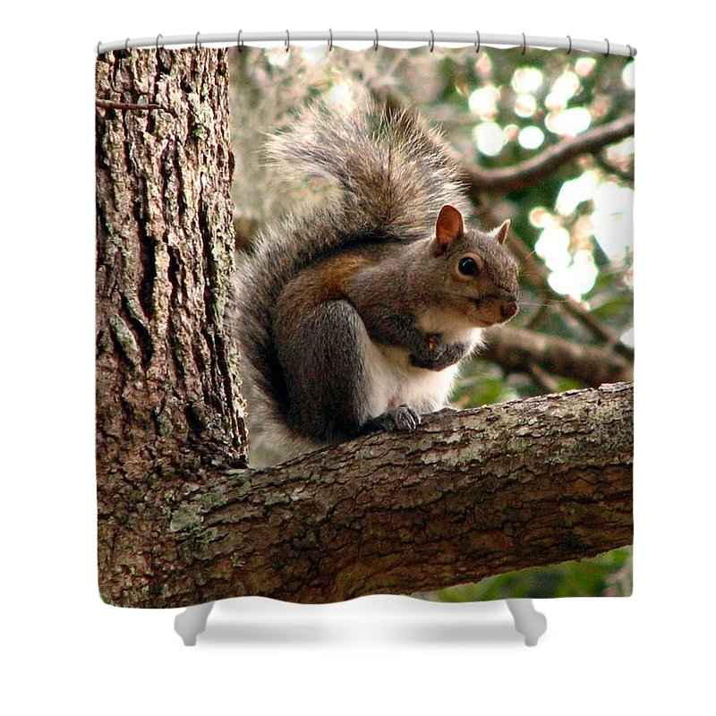 Squirrel Shower Curtain featuring the photograph Squirrel 9 by J M Farris Photography