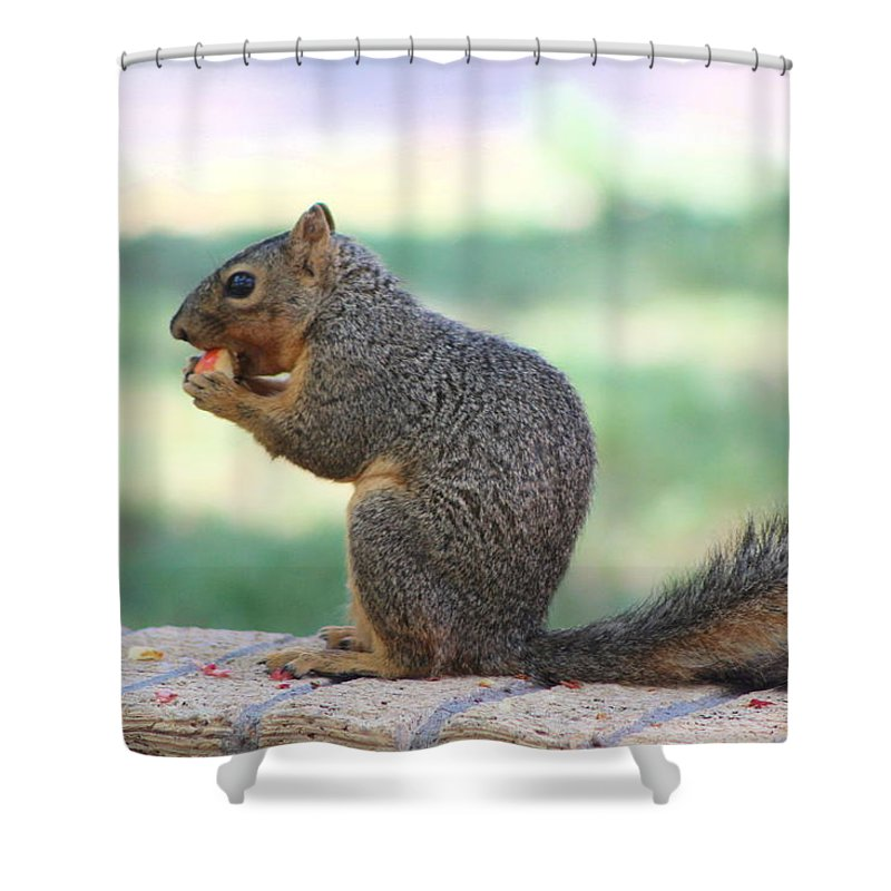 Squirrel Shower Curtain featuring the photograph Squirrel Eating Crab Apple by Colleen Cornelius