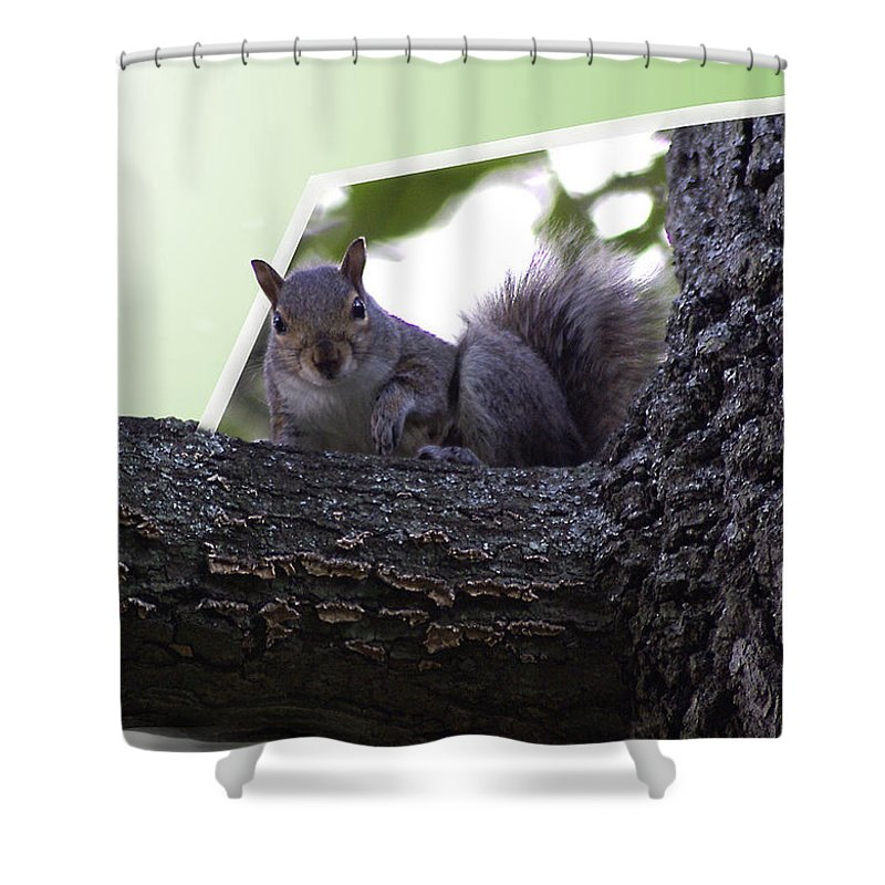 2d Shower Curtain featuring the photograph Squirrel On A Limb by Brian Wallace