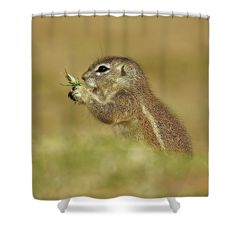 Squirrel Shower Curtain featuring the photograph Squirrel by Suzanne Morshead